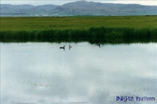 Fuglafriðlandið á Eyrarbakka